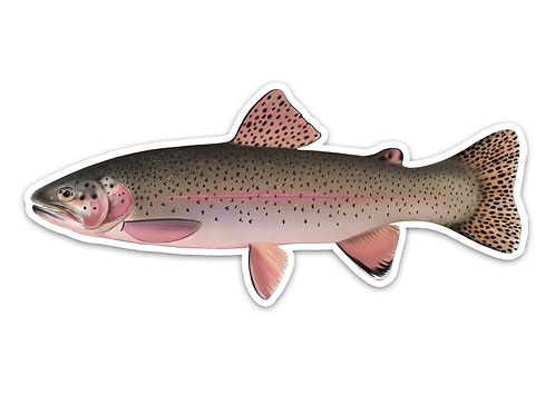 Rainbow Trout - Waterproof Sticker