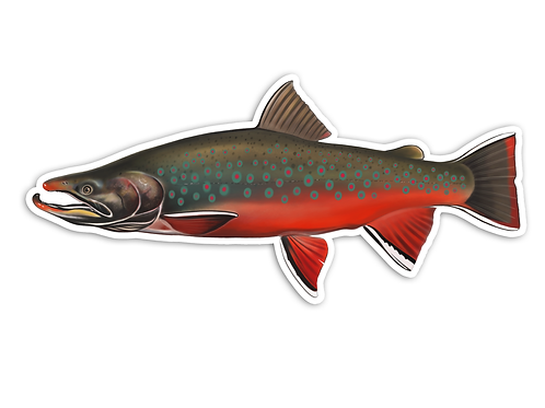 Dolly Varden (Male) - Waterproof Sticker