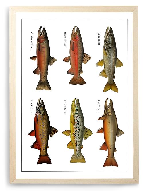 Trophy Trout - Chart Print