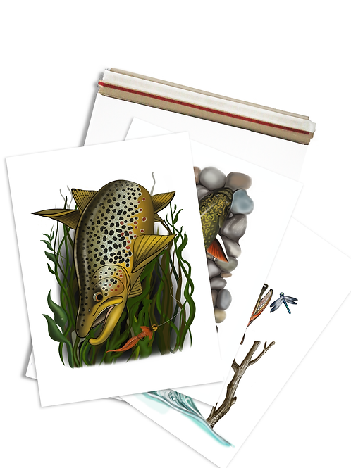 Trout Illustration - Prints