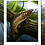 Thumbnail: River Brown Trout - Limited Print (1/20)