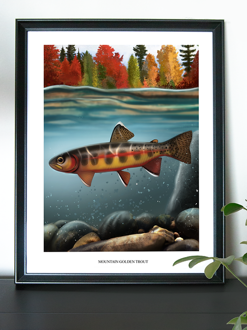 Mountain Golden Trout - Poster