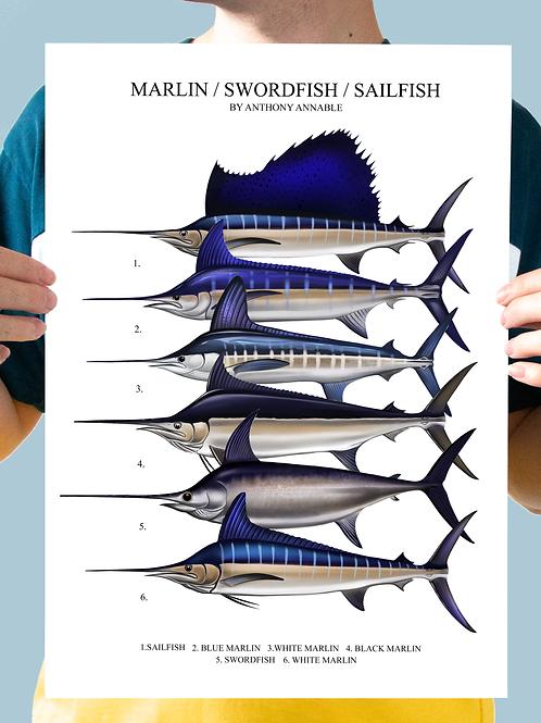Marlin/Swordfish/Sailfish - Chart Print