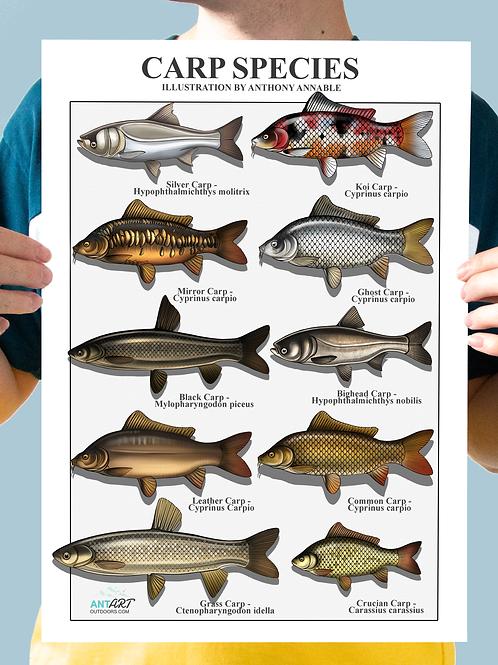 Carp Species - Chart Print