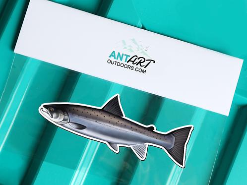 Atlantic Salmon - Magnet