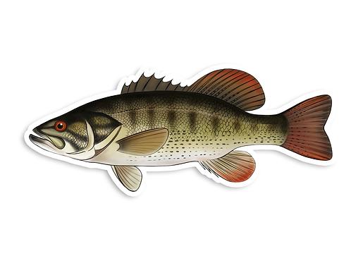 Shoal Bass - Waterproof Sticker