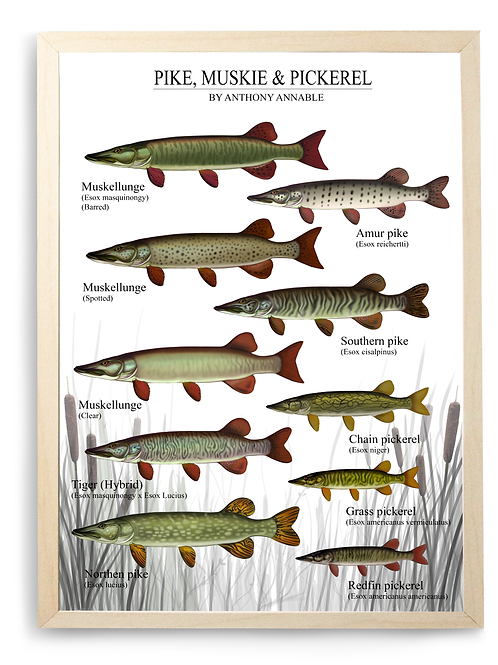 Pike, Muskie & Pickerel - Chart Print