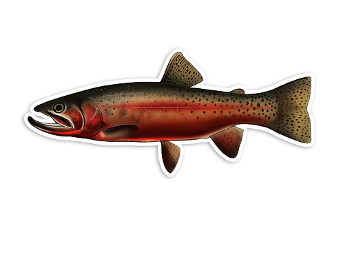 Trophy Cutthroat Trout - Waterproof Sticker