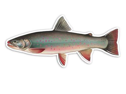 Dolly Varden (Female) - Waterproof Sticker