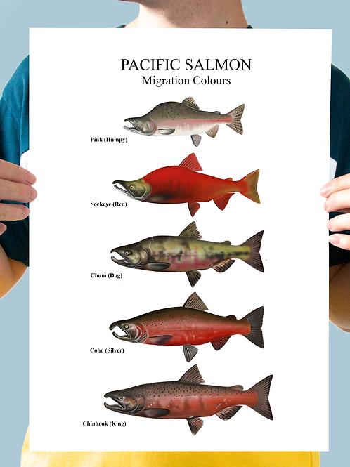 Pacific Salmon Chart - Print