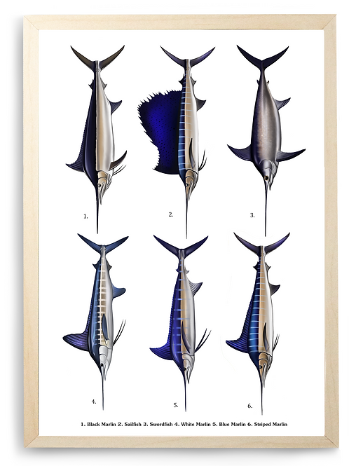 Marlin/Swordfish/Sailfish - Poster Print