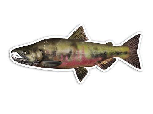 Chum Salmon - Waterproof Sticker