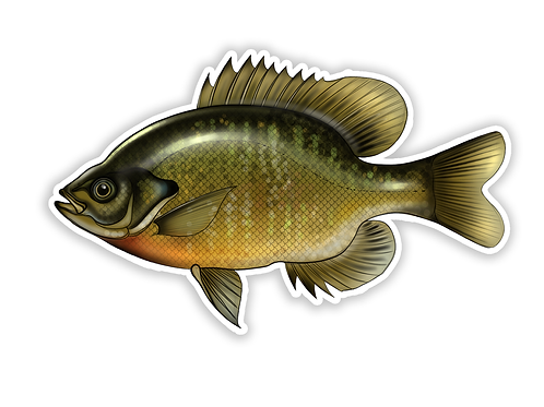 Bluegill Sunfish - Waterproof Sticker