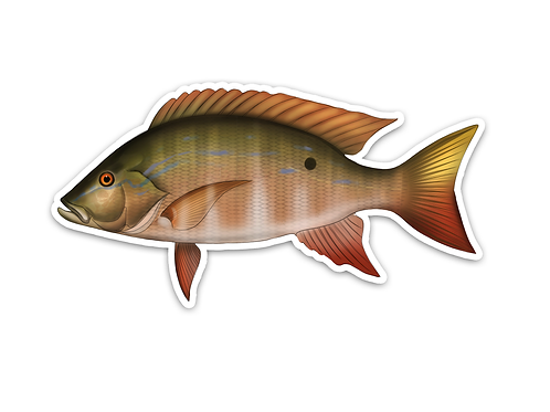Mutton Snapper - Waterproof Sticker