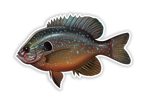Longear Sunfish - Waterproof Sticker