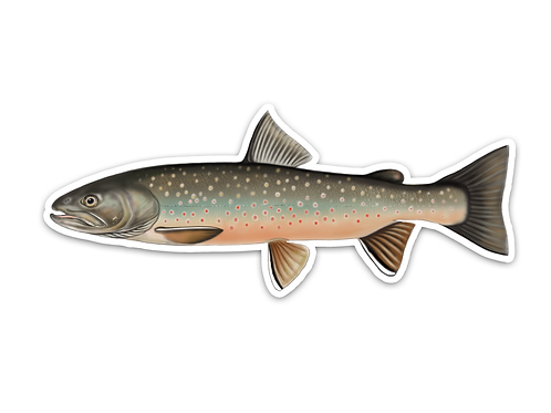 Bull Trout - Waterproof Sticker