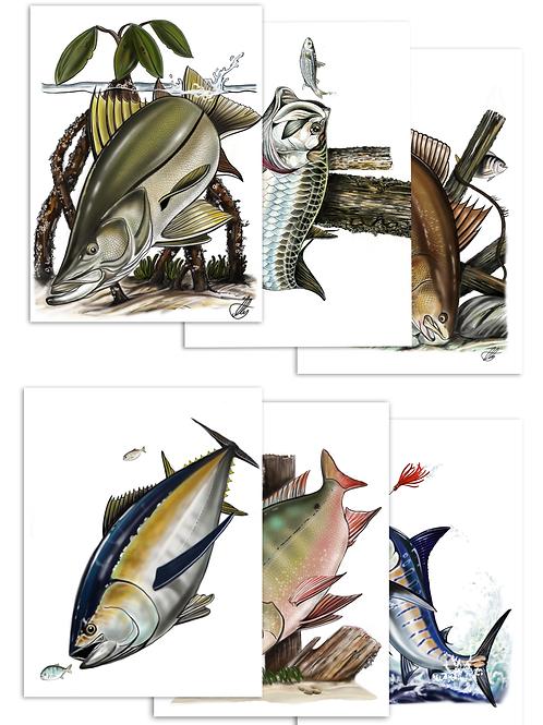 Marine fish Illustrations - Prints