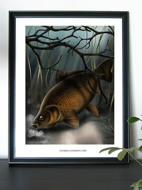 Feeding Common Carp - Poster