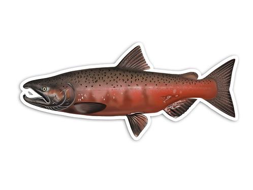 Chinhook Salmon/King - Waterproof Sticker
