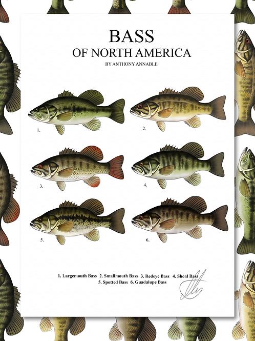 Bass of North America - Print