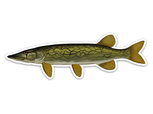 Chain Pickerel- Waterproof Sticker