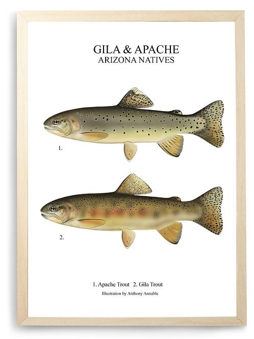 Apache & Gila - Trout Chart Print