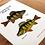 Thumbnail: Freshwater Perch Chart - Print