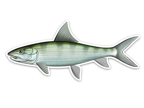Bonefish - Waterproof Sticker