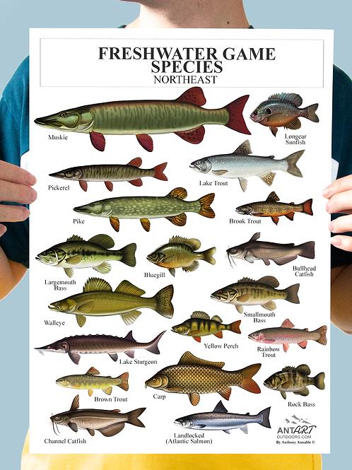 Freshwater Game Species (Northeast) - Chart Print