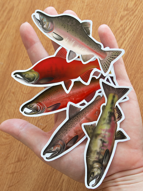 Pacific Salmon- Magnets
