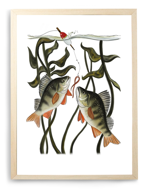 Perch Print - Illustration