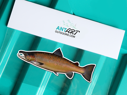 Atlantic Salmon Spawning - Magnet