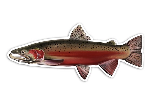 Spawning Steelhead - Waterproof Sticker