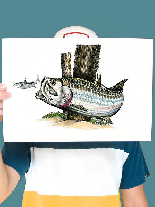Tarpon Illustration - Print
