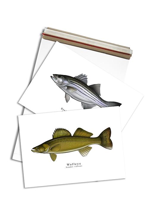 Walleye & Striped Bass - Print