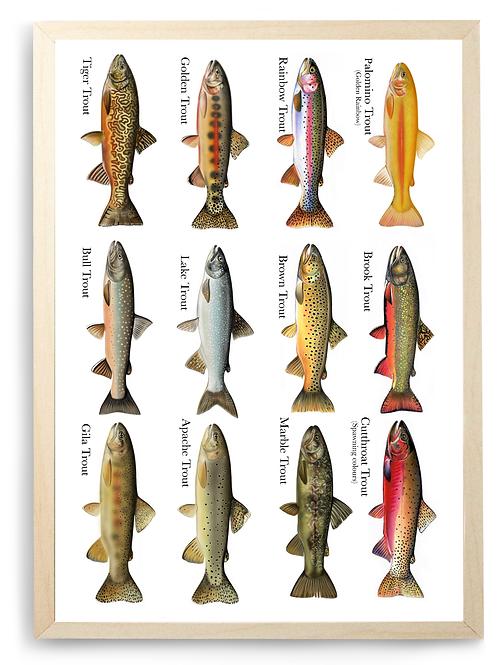 12 Trout Species - Chart Print
