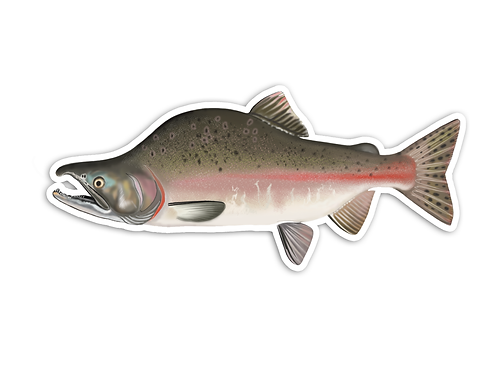 Pink Salmon - Waterproof Sticker