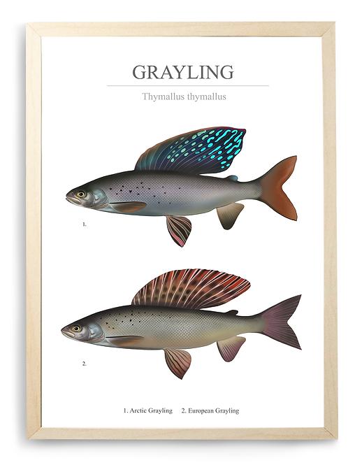Grayling Chart - Print
