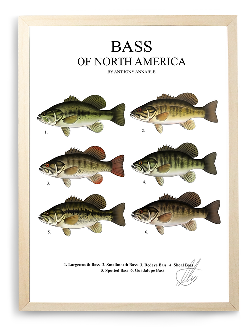 Bass of North America - Print