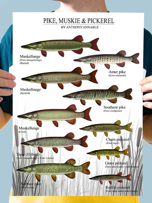 Pike, Muskie & Pickerel - Chart Print