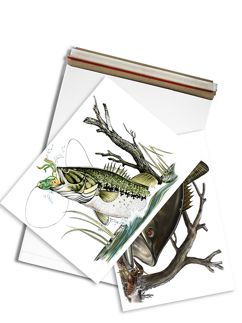 Bass Illustration - Prints