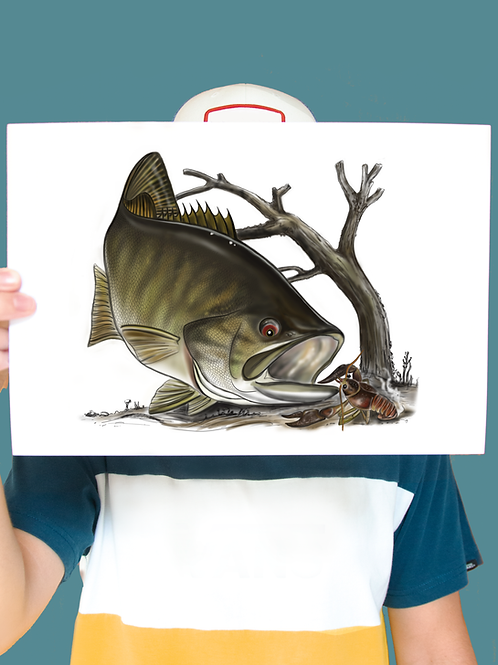 Smallmouth Bass Illustration - Print