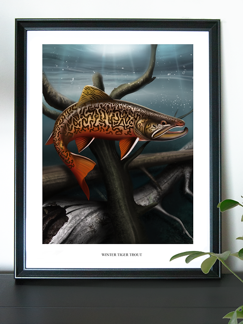 Winter Tiger Trout - Poster