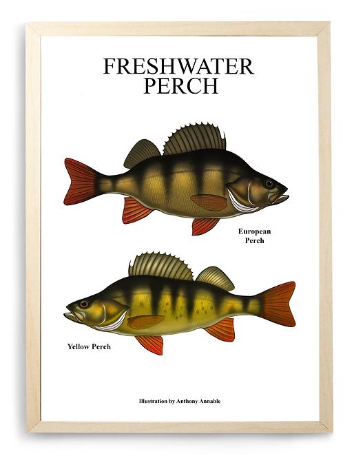 Freshwater Perch Chart - Print