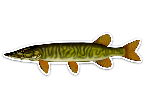 Grass Pickerel- Waterproof Sticker