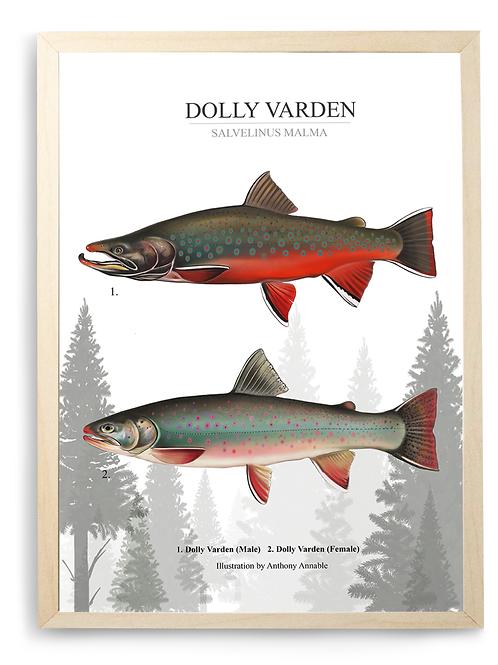 Dolly Varden Chart - Print
