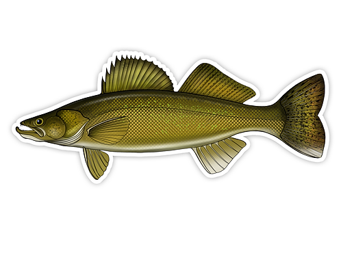 Walleye - Waterproof Sticker