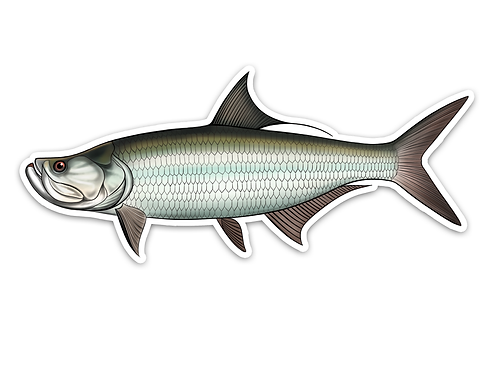 Tarpon - Waterproof Sticker
