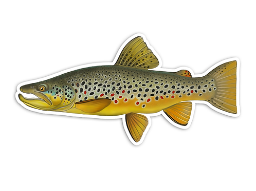 Brown Trout V2 - Waterproof Sticker
