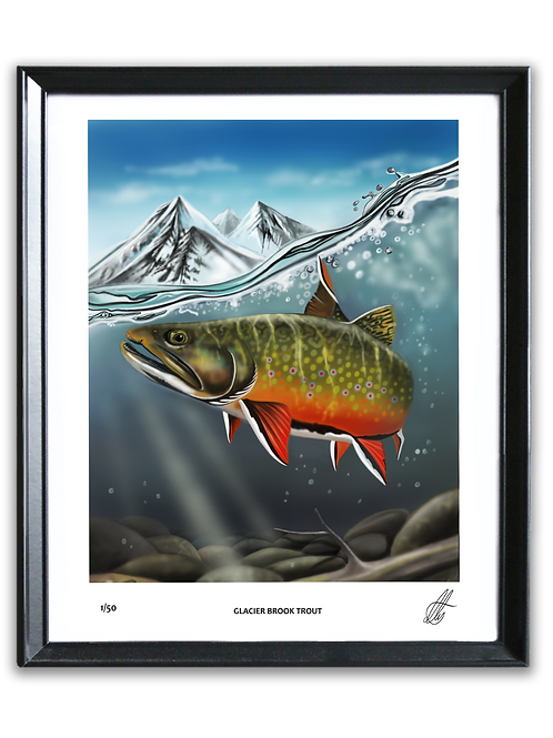 (Limited Edition) Glacier Brook Trout